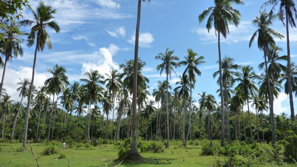 FILIPINI: Načrt potovanja (25 dni)