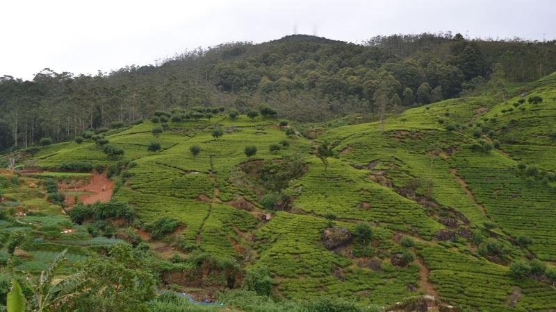 10c2f-20130201_srilanka503