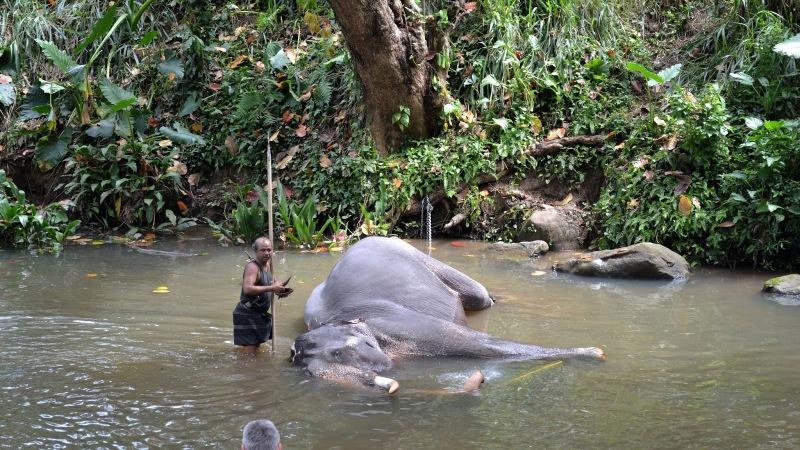 15b1f-20130201_srilanka797