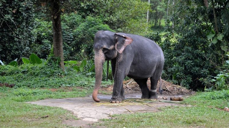 19c94-20130201_srilanka761