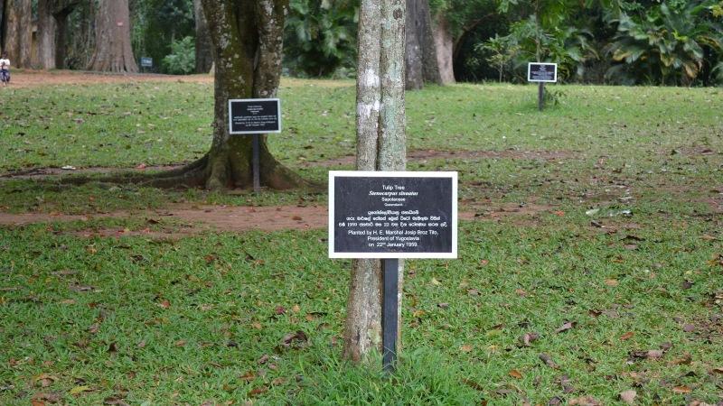 23367-20130201_srilanka726