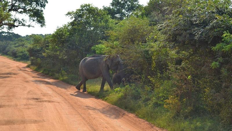 41f92-20130201_srilanka401