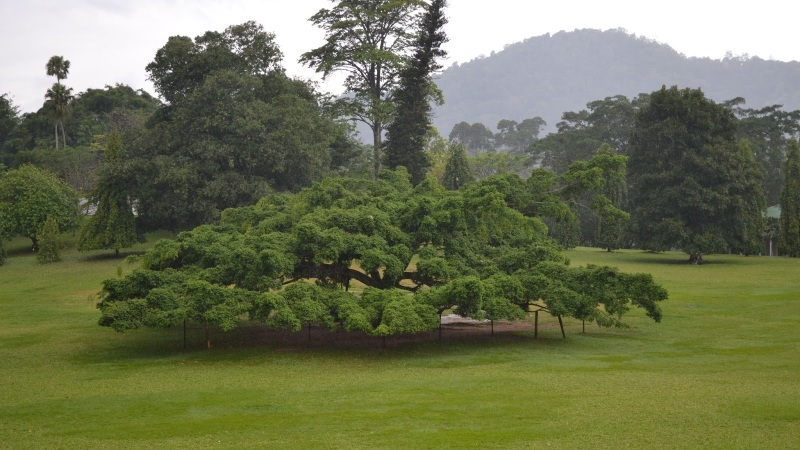6e78a-20130201_srilanka694
