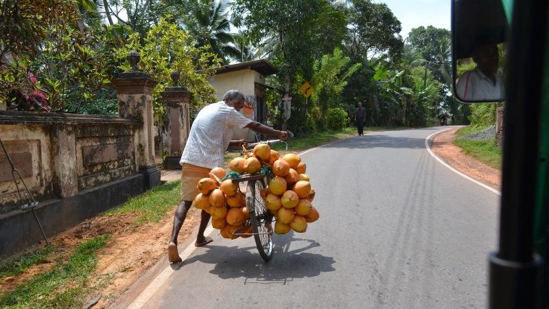 9049a-20130201_srilanka107