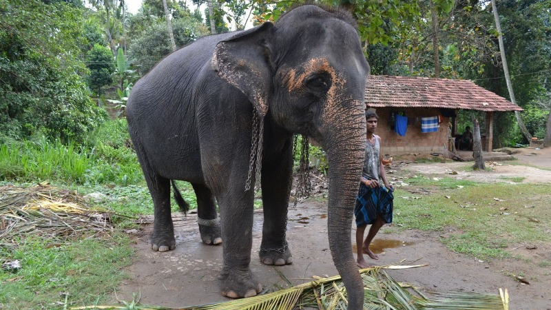 a73fe-20130201_srilanka757