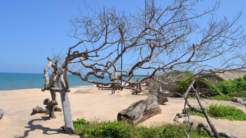 d45e8-20130201_srilanka980