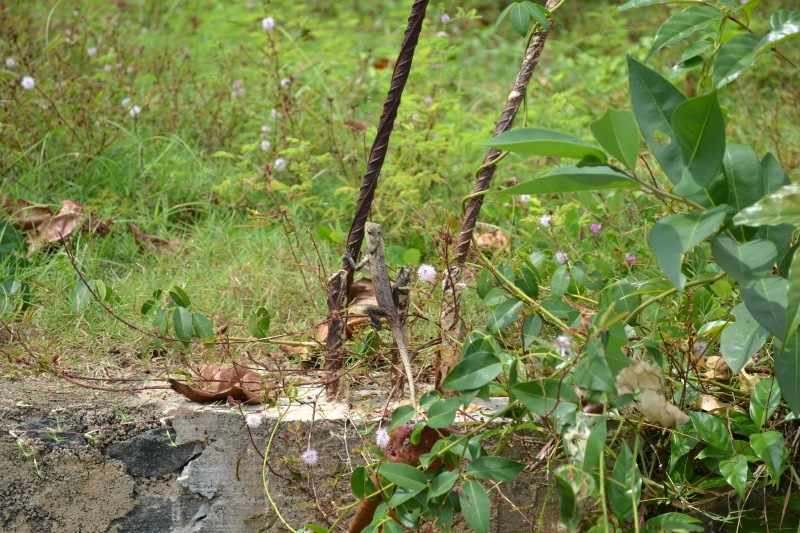 e61ef-20130201_srilanka124