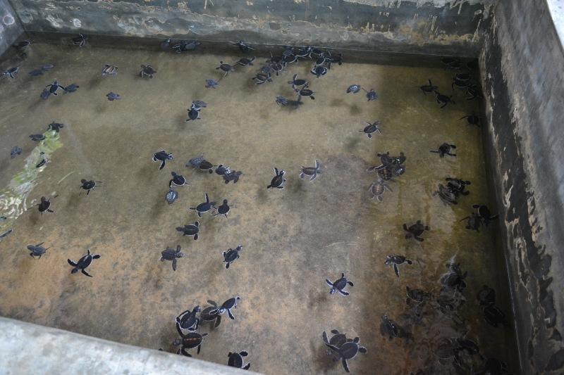 e6e67-20130201_srilanka153
