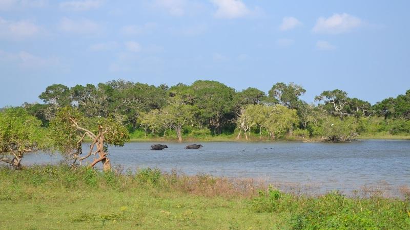 fa2f0-20130201_srilanka377