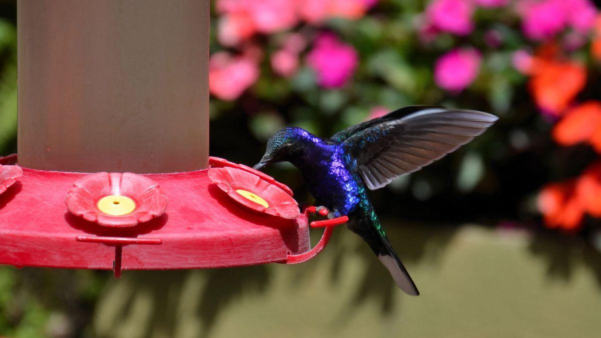 KOSTARIKA: Zip-line, kolibriji in tarantela (9. dan)