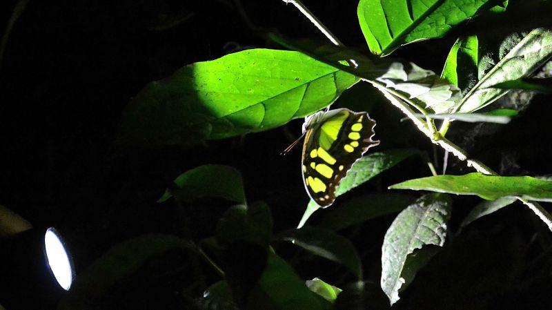 2014_Kostarika (1118)