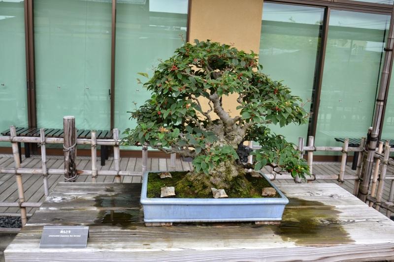 0886d-japonska2b354