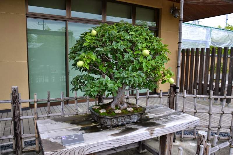 facfb-japonska2b358