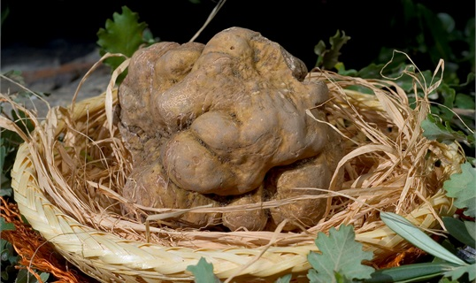 croatia_pps-events_Momjan-Most-Kremenje_Istrian-White-Truffles-Days-and-Muscat-Momjanski_001