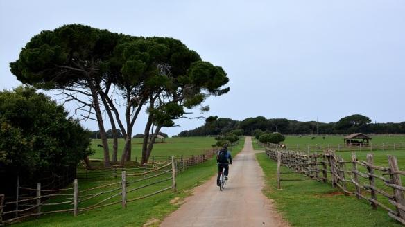 HRVAŠKA: S kolesom po nacionalnem parku Brijuni   Andreja's WORLD