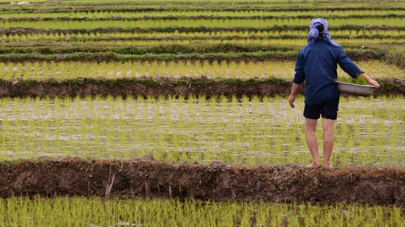 Vietnam in Kambodza 2016 (4830)