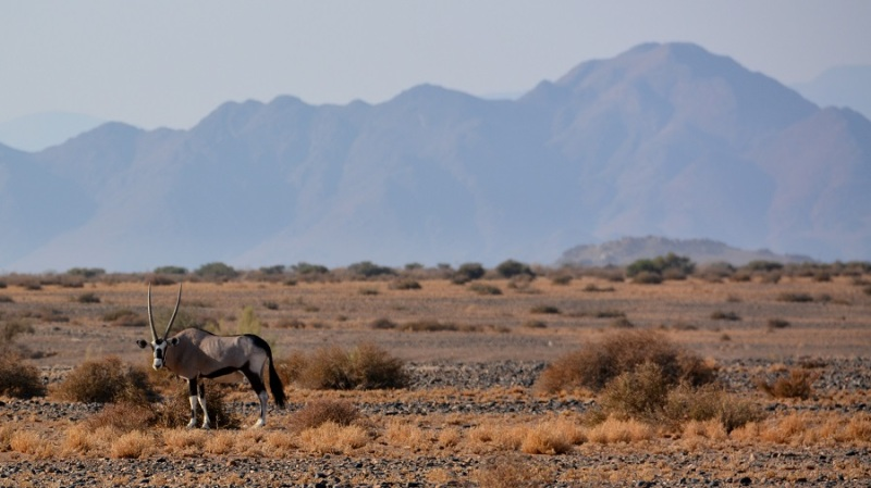 namibija-in-bocvana-2016-141