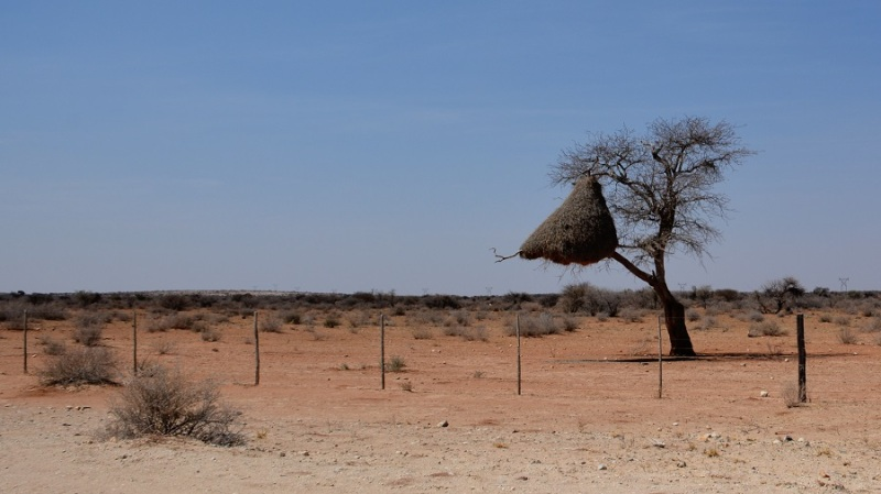 namibija-in-bocvana-2016-19