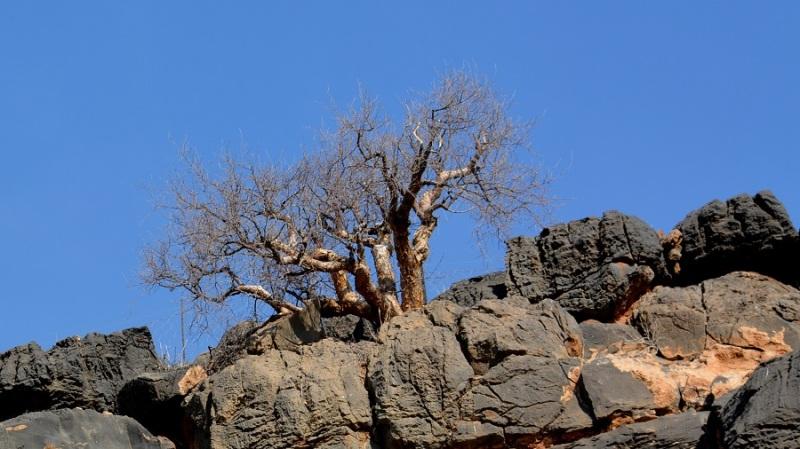 namibija-in-bocvana-2016-39