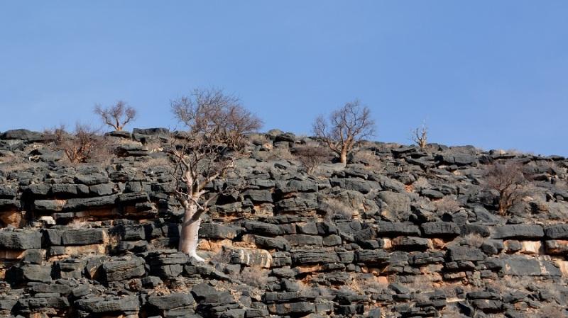 namibija-in-bocvana-2016-43