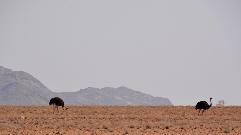 namibija-in-bocvana-2016-709