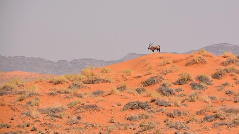namibija-in-bocvana-2016-748