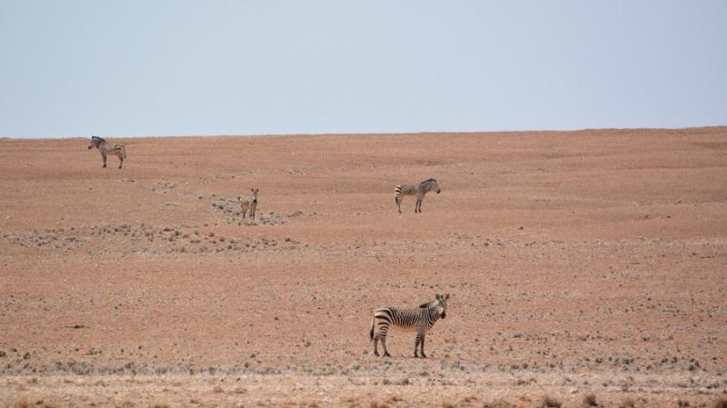 namibija-in-bocvana-2016-757