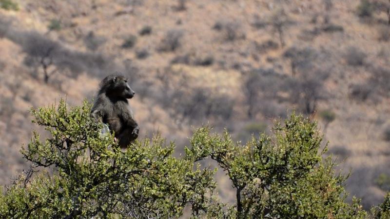 namibija-in-bocvana-2016-8