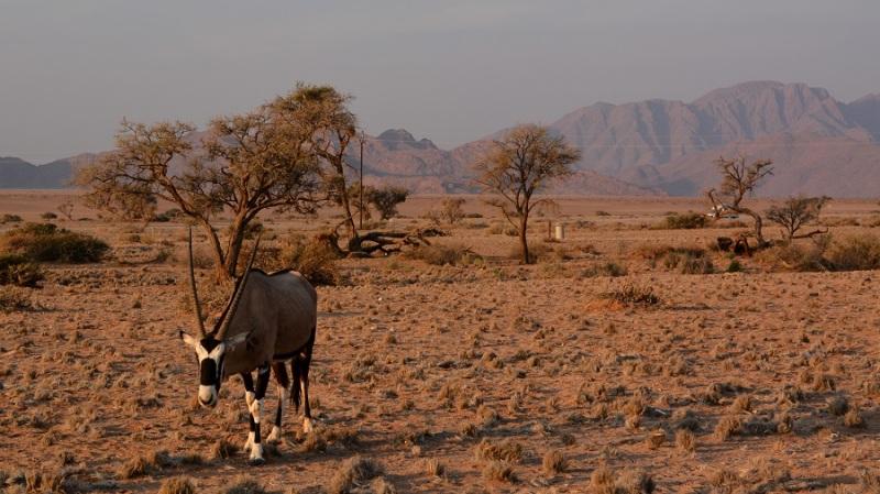 namibija-in-bocvana-2016-95