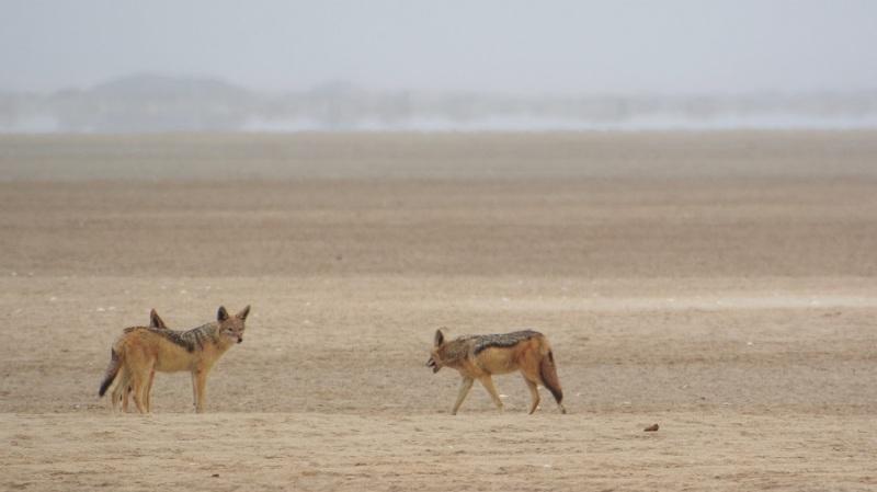 namibija-in-bocvana-2016-1055