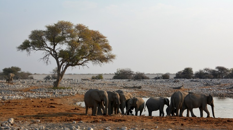 namibija-in-bocvana-2016-1654