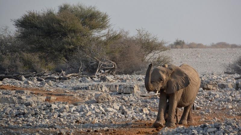 namibija-in-bocvana-2016-1661