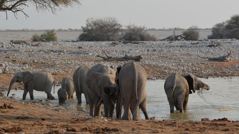 namibija-in-bocvana-2016-1665