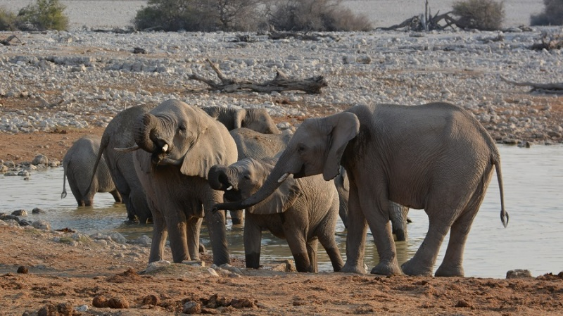 namibija-in-bocvana-2016-1668