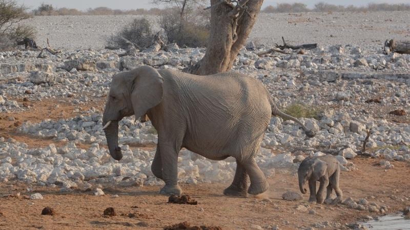 namibija-in-bocvana-2016-1675