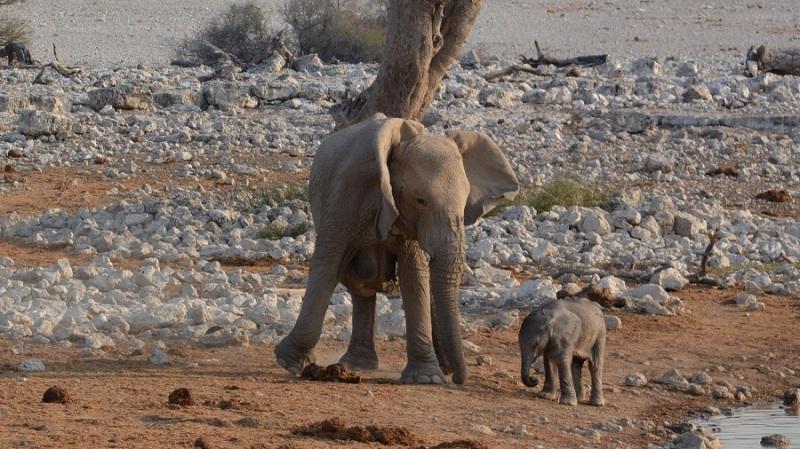 namibija-in-bocvana-2016-1677
