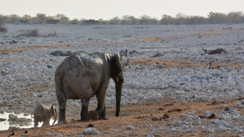 namibija-in-bocvana-2016-1687