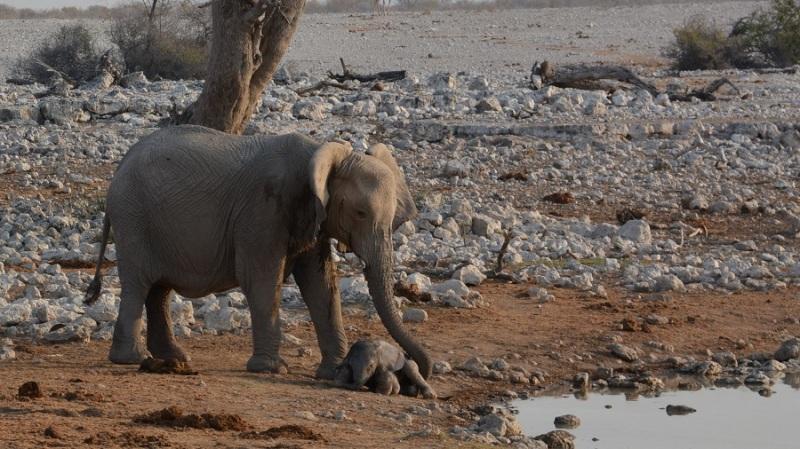 namibija-in-bocvana-2016-1694