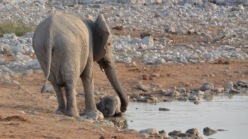 namibija-in-bocvana-2016-1699