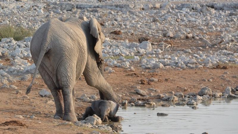 namibija-in-bocvana-2016-1700