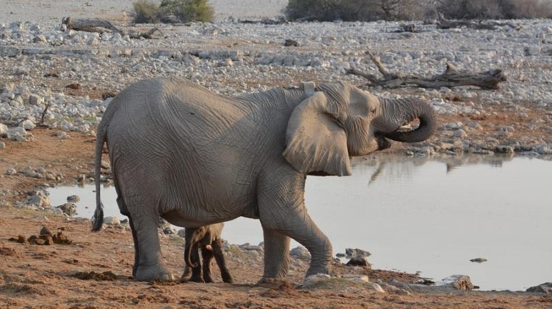 namibija-in-bocvana-2016-1704