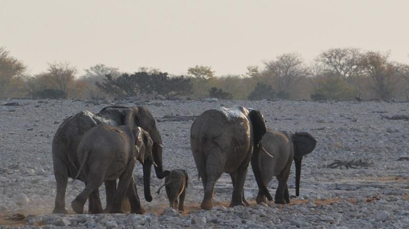 namibija-in-bocvana-2016-1707
