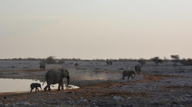 namibija-in-bocvana-2016-1715