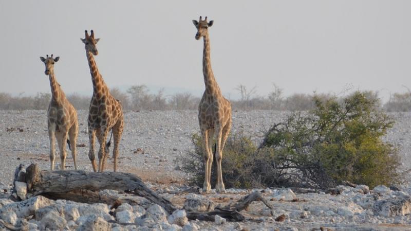 namibija-in-bocvana-2016-1723