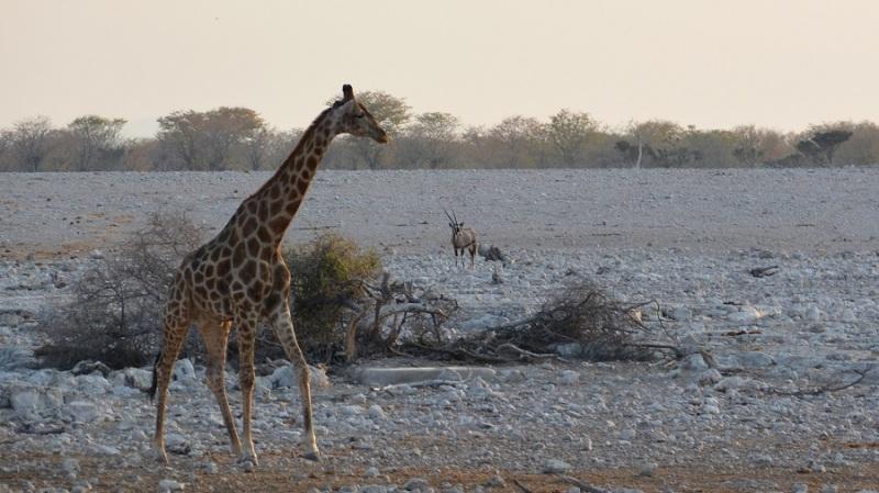 namibija-in-bocvana-2016-1729