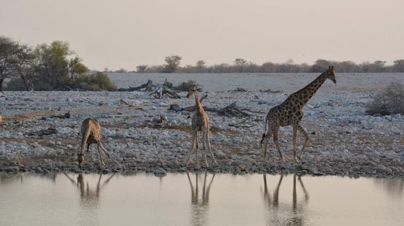 namibija-in-bocvana-2016-1734