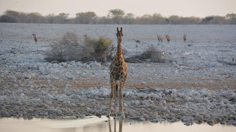 namibija-in-bocvana-2016-1737
