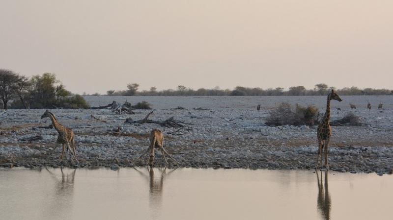 namibija-in-bocvana-2016-1742
