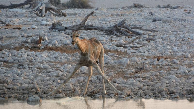 namibija-in-bocvana-2016-1756
