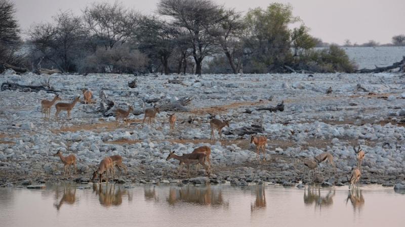 namibija-in-bocvana-2016-1764